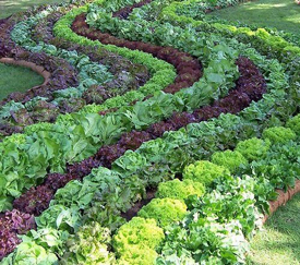 edible vegetable garden