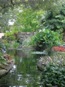 bromeliads by pond used for landscaping