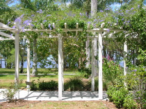 queens-wreath-on-pergola - support for climbing plants