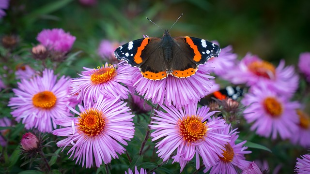 what makes a butterfly garden - Florida Butterfly Garden